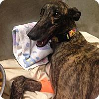 Adopt A Pet :: Ashley - Tucson, AZ