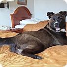 Adopt A Pet :: Dolly NO ADOPT FEE - Sherman, CT