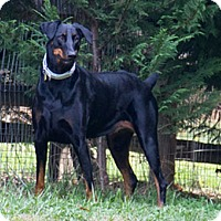 Adopt A Pet :: SOOKIE - Greensboro, NC