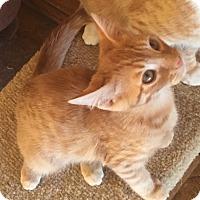 Adopt A Pet :: Leo - Encinitas, CA