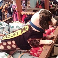 Adopt A Pet :: IGNACIO (Nacho) - Portland, OR