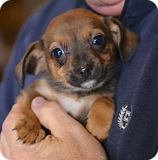 Rescue Small Dogs Connecticut