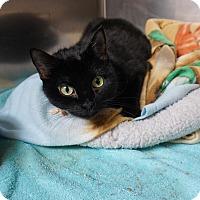 Adopt A Pet :: Melody - Mt Vernon, NY