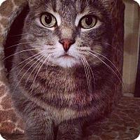 Adopt A Pet :: BIJOU - THORNHILL, ON