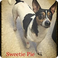 Adopt A Pet :: Sweetie Pie - Charlemont, MA