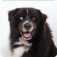 Adopt A Pet :: Charlie - San Luis Obispo, CA