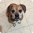 Adopt A Pet :: Levi