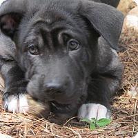 Adopt A Pet :: Pete - Ball Ground, GA