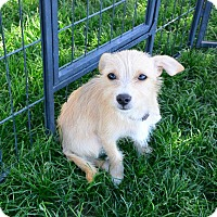 Adopt A Pet :: Daisy - Meridian, ID