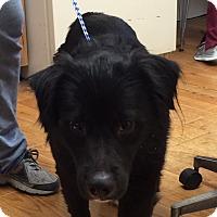 Adopt A Pet :: Buster - Greensburg, PA