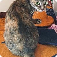 Domestic Shorthair Cat for adoption in Caro, Michigan - Nippy