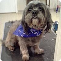 Adopt A Pet :: Oscar - Hillsboro, IL