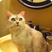 Adopt A Pet :: Cleo - Tampa, FL