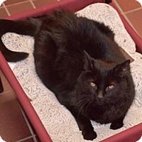 Adopt A Pet :: Herkie - Des Moines, IA