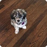 Adopt A Pet :: Tanner - Littleton, CO