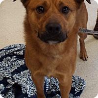 Adopt A Pet :: Dozer - Grants Pass, OR