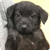 Adopt A Pet :: Morgan - Phoenix, AZ