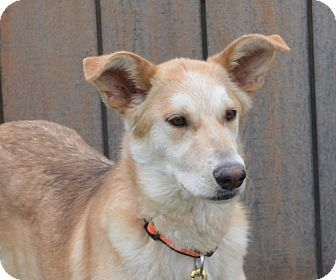Shepherd (Unknown Type) Mix Dog for adoption in New Cumberland, West Virginia - Carmen