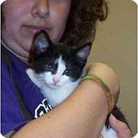 Adopt A Pet :: Porsha - Reston, VA