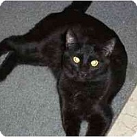 Adopt A Pet :: George Weasley - Secaucus, NJ
