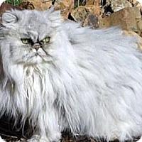 Adopt A Pet :: Diamond - Davis, CA