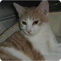 Adopt A Pet :: Peaches - Wenatchee, WA