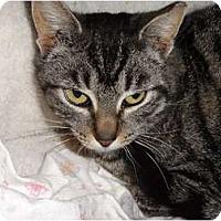 Adopt A Pet :: Little Simba - Barnegat, NJ