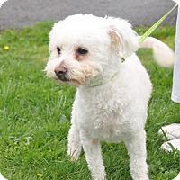 Adopt A Pet :: Lovee - Tumwater, WA