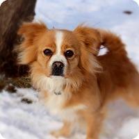 Adopt A Pet :: Floyd - Green Bay, WI