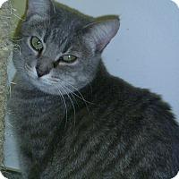 Adopt A Pet :: Sheila - Hamburg, NY