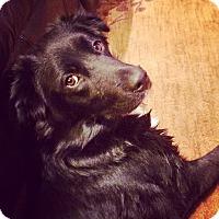 Adopt A Pet :: Lexie - Huntsville, AL