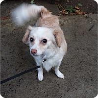 Adopt A Pet :: Jasmin - Encino, CA