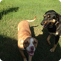 Adopt A Pet :: Ellie - Byron, GA