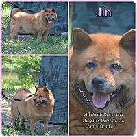 Adopt A Pet :: Jin - Daleville, AL