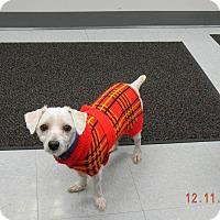 Adopt A Pet :: KAYOS - Sandusky, OH