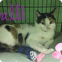Adopt A Pet :: Callie - Bloomingdale, NJ