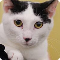 Adopt A Pet :: Wendy - Sparta, NJ