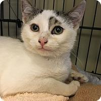 Adopt A Pet :: Jezebel - Island Park, NY