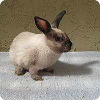Adopt A Pet :: Katie - Bonita, CA