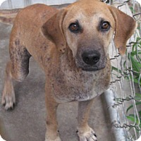 Adopt A Pet :: Dexter - Tahlequah, OK