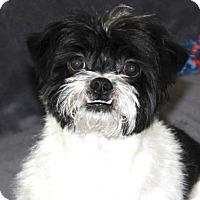 Adopt A Pet :: Rickman - Alpharetta, GA