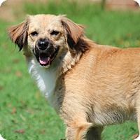 Adopt A Pet :: Ozzy - Yadkinville, NC