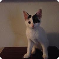 Adopt A Pet :: Storm - Pelham, AL