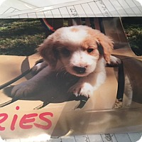 Adopt A Pet :: Aries - Hohenwald, TN