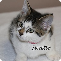 Adopt A Pet :: Sweetie - Idaho Falls, ID