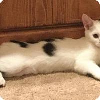Adopt A Pet :: Warrior: Brambleberry - Palo Alto, CA