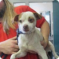 Adopt A Pet :: Emmett - Goleta, CA