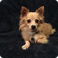 Adopt A Pet :: Tucker - Santa Clara, CA