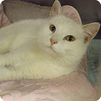 Adopt A Pet :: Ghost - Martinsburg, WV
