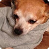 Adopt A Pet :: Valentine - Staten Island, NY